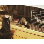 動物と暮らす家